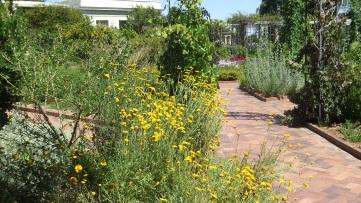 Huntington Herb Garden DSCF2391