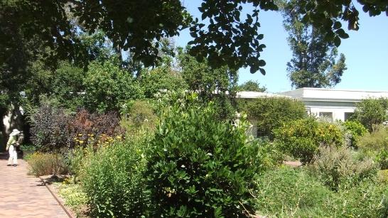 Huntington Herb Garden DSCF2392