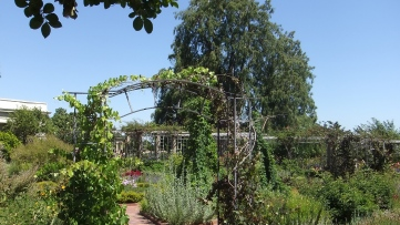 Huntington Herb Garden DSCF2393
