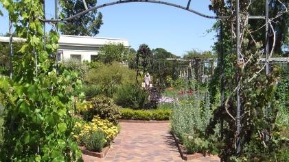 Huntington Herb Garden DSCF2395