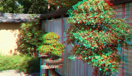 Huntington Bonsai Garden 3DA 1080p DSCF7727