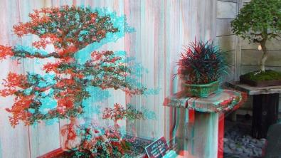 Huntington Bonsai Garden 3DA 1080p DSCF7728
