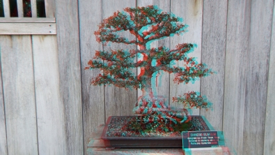 Huntington Bonsai Garden 3DA 1080p DSCF7729