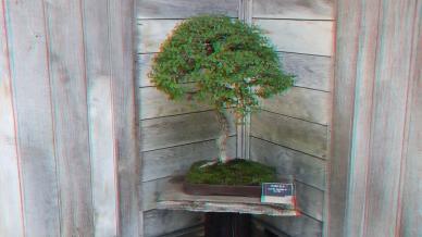 Huntington Bonsai Garden 3DA 1080p DSCF7730