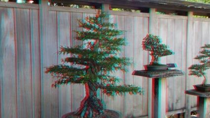 Huntington Bonsai Garden 3DA 1080p DSCF7731