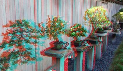 Huntington Bonsai Garden 3DA 1080p DSCF7733