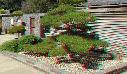Huntington Bonsai Garden 3DA 1080p DSCF7734