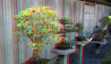 Huntington Bonsai Garden 3DA 1080p DSCF7736