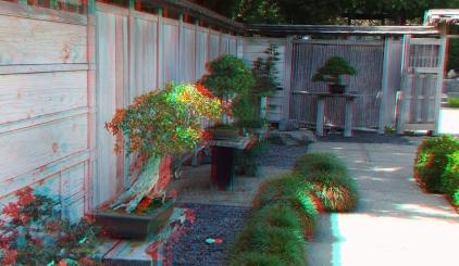 Huntington Bonsai Garden 3DA 1080p DSCF7737
