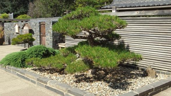 Huntington Bonsai Garden DSCF7734