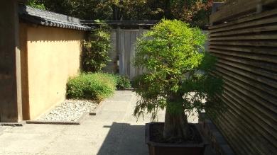 Huntington Bonsai Garden DSCF7742
