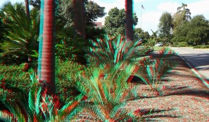 Huntington Cycad Garden 3DA 1080p DSCF7499