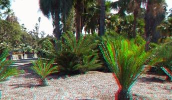 Huntington Cycad Garden 3DA 1080p DSCF7500