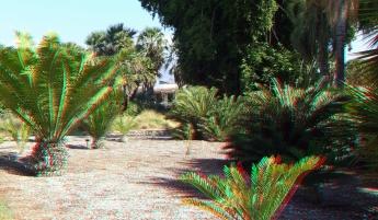Huntington Cycad Garden 3DA 1080p DSCF7501