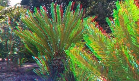 Huntington Cycad Garden 3DA 1080p DSCF7514