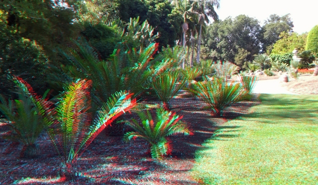 Huntington Cycad Garden 3DA 1080p DSCF7515