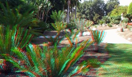 Huntington Cycad Garden 3DA 1080p DSCF7516