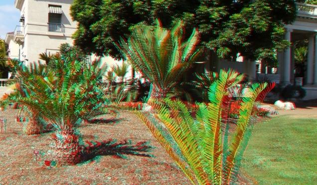 Huntington Cycad Garden 3DA 1080p DSCF7521