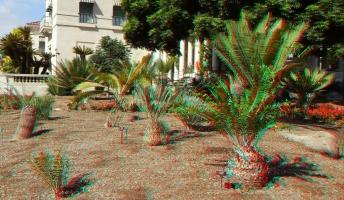 Huntington Cycad Garden 3DA 1080p DSCF7522