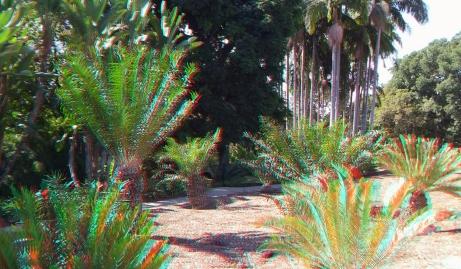 Huntington Cycad Garden 3DA 1080p DSCF7526