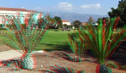 Huntington Cycad Garden 3DA 1080p DSCF7527