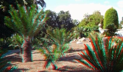 Huntington Cycad Garden 3DA 1080p DSCF7530
