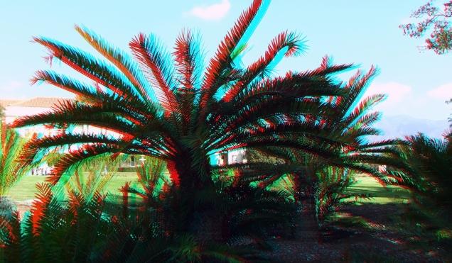 Huntington Cycad Garden 3DA 1080p DSCF7531