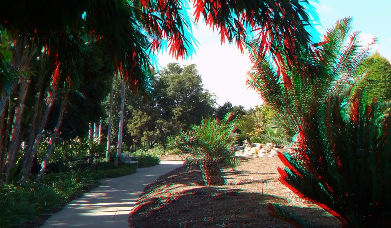 Huntington Cycad Garden 3DA 1080p DSCF7533