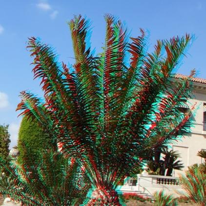 Huntington Cycad Garden 3DA 1080p DSCF7534