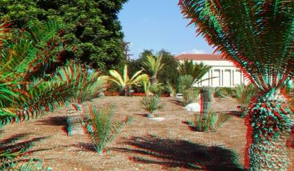 Huntington Cycad Garden 3DA 1080p DSCF7537