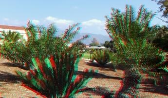 Huntington Cycad Garden 3DA 1080p DSCF7539