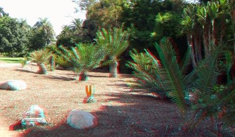 Huntington Cycad Garden 3DA 1080p DSCF7546