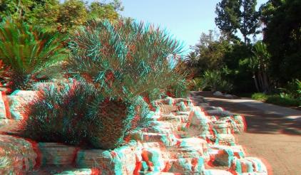 Huntington Cycad Garden 3DA 1080p DSCF7572