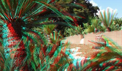 Huntington Cycad Garden 3DA 1080p DSCF7588