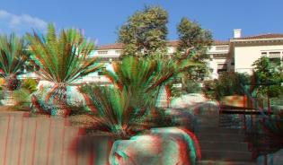Huntington Cycad Garden 3DA 1080p DSCF7589