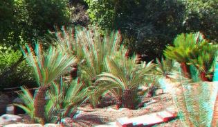 Huntington Cycad Garden 3DA 1080p DSCF7592