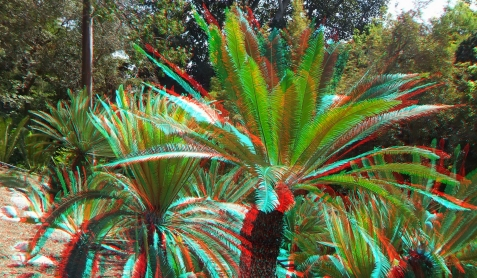 Huntington Cycad Garden 3DA 1080p DSCF7606