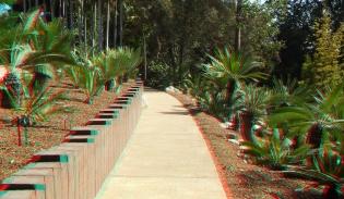 Huntington Cycad Garden 3DA 1080p DSCF7612