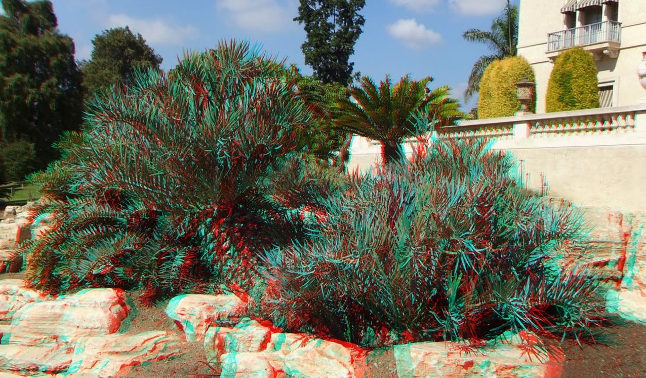Huntington Cycad Garden 3DA 1080p DSCF7630