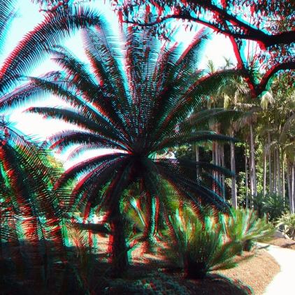 Huntington Cycad Garden 3DA 1080p DSCF7648