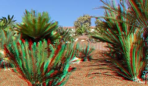 Huntington Cycad Garden 3DA 1080p DSCF7673