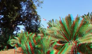Huntington Cycad Garden 3DA 1080p DSCF7679