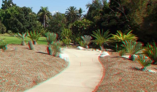 Huntington Cycad Garden 3DA 1080p DSCF7767