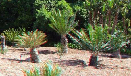 Huntington Cycad Garden 3DA 1080p DSCF7768