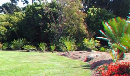 Huntington Cycad Garden 3DA 1080p DSCF7773