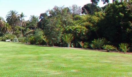 Huntington Cycad Garden 3DA 1080p DSCF7774