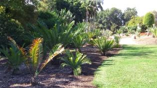 Huntington Cycad Garden DSCF7515