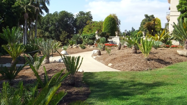 Huntington Cycad Garden DSCF7517