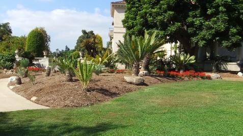 Huntington Cycad Garden DSCF7518