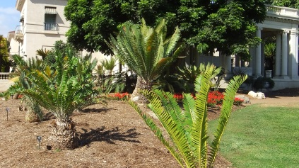 Huntington Cycad Garden DSCF7521
